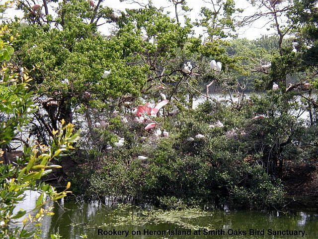 Heron Island at Smith Oaks Bird Sanctuary
