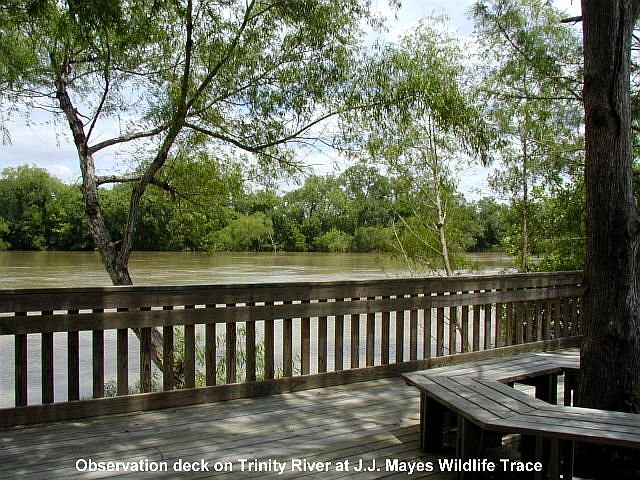 Trinity River from J.J. Mayes Wildlife Trace